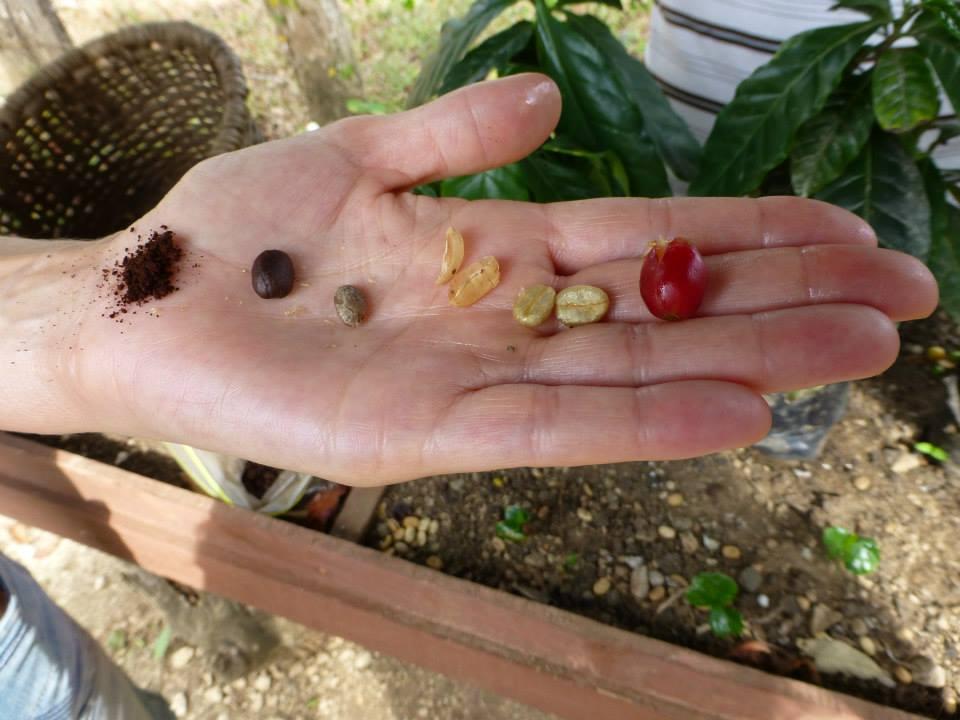 Coffe beans process